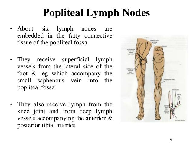 Lymph drainage-210-lower-limb-rs-58-638.jpg