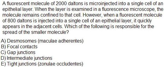 Which Cell surface adhesion?-35.jpg