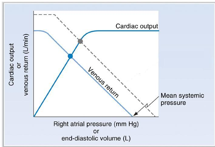 Cardiac output/venous return curves question-3_12.jpg