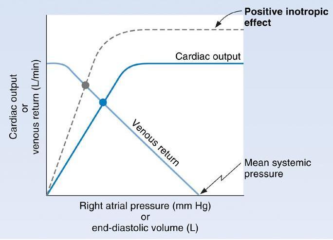 Cardiac output/venous return curves question-3_14.jpg