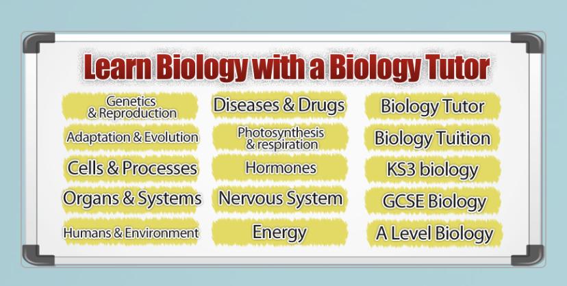 Immunology 3 day Intense review-6e6bd694-479b-485c-b86a-879a1da149c3_1572418037973.jpeg