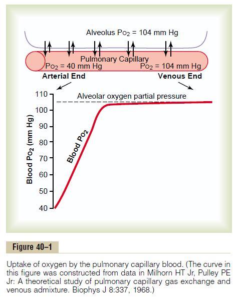 Oxygen tension at pulmonary capillaries (Graph)-alveoli.jpg