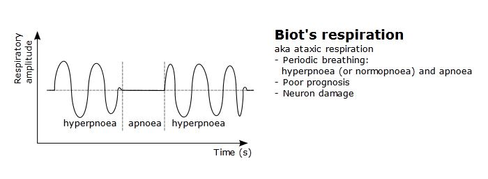 Breathing Patterns-biot-respiration.jpg