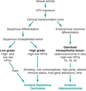 Pathogenesis of cervical neoplasia diagram!-cervical-neoplasia.jpg