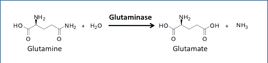 Glutaminase induction in chronic acidosis-diagram_1.png