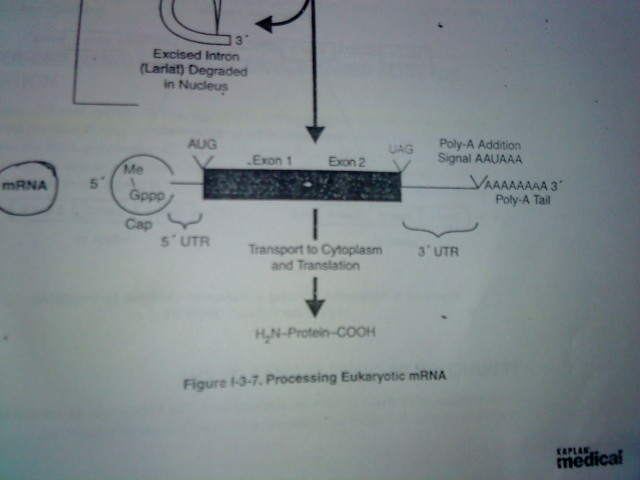 How do we calculate this gene mRNA bases question-dsc00453.jpg