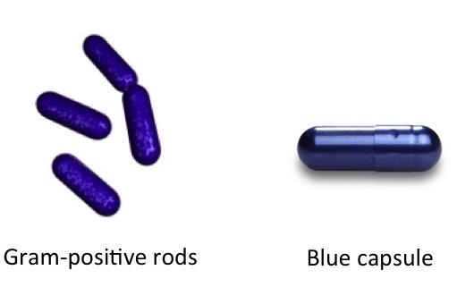 Gram-Positive Rods Mnemonic-gpr.jpg