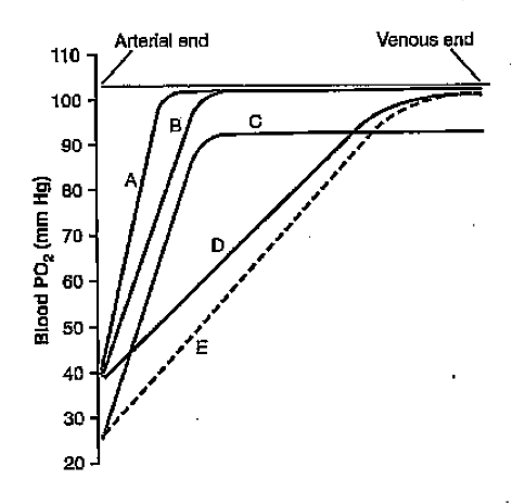 Oxygen tension at pulmonary capillaries (Graph)-graph.png