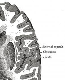 External Capsule?-gray742-c.jpg