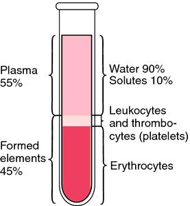 Understanding the Hematocrit Percentage-hematocrit.png