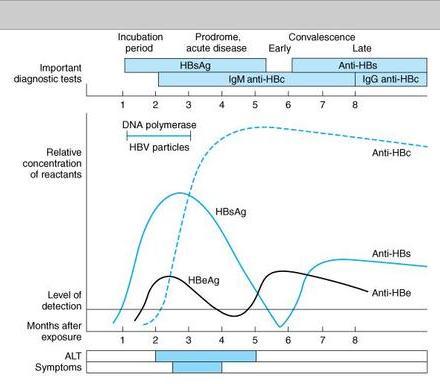 Hepatitis B viral makers timeline-hepbgraph2.jpg