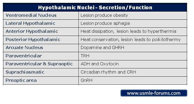Hypothalamic Nuclei-hypothalamic-nuclei.jpg