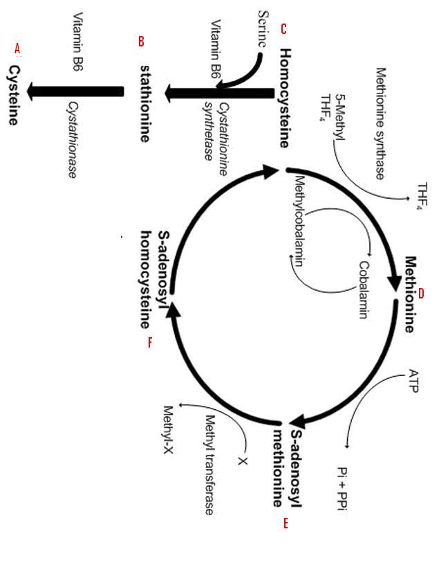 Kyphosis, Tall stature, Long limbs, Dislocation of Lens, & Mental retardation Diagnosis!!!!!-imagae.jpg