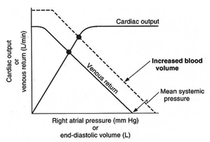 Effect of IV calcium bolus on cardiac output and venous return-increased_blood_volume_venous_return.jpg