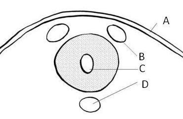 Neural Tube Labels-neuraltube2.jpg