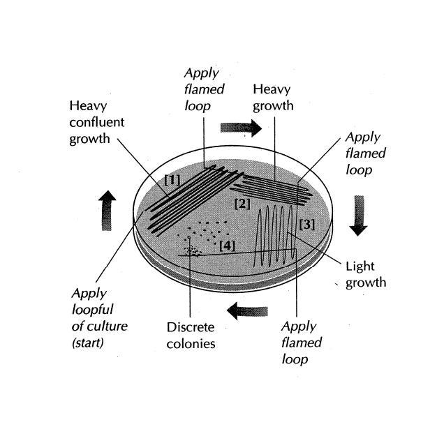 Help me label this image-petri-dish1.jpg
