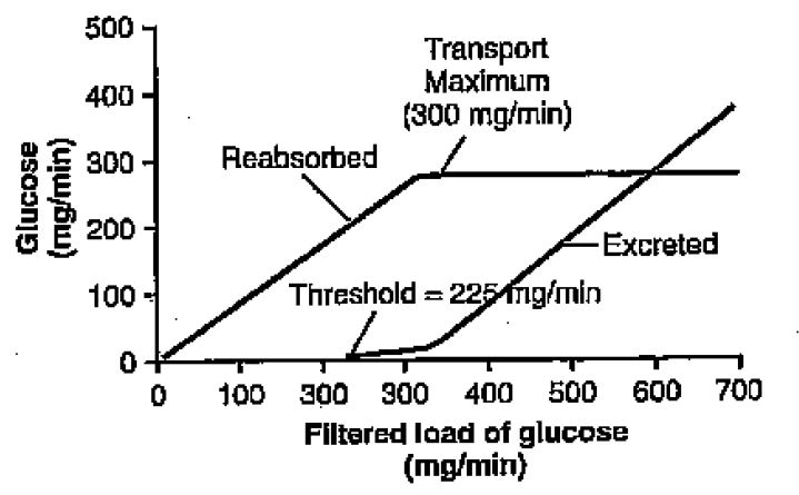 What would be the rate of urinary glucose excretion?-qs1.jpg