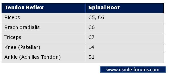 Tendon Reflexes Spinal Root-reflexes-roots.jpg