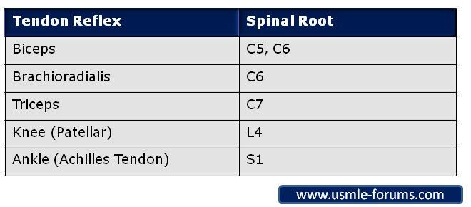 Tendon Reflexes Spinal Root-reflexes-roots.jpg