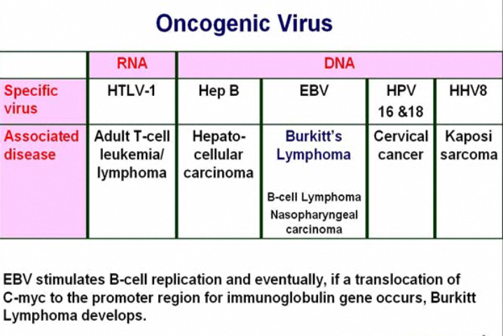 Oncogenic Viruses-screen-shot-2011-05-19-3.07.21-pm.png