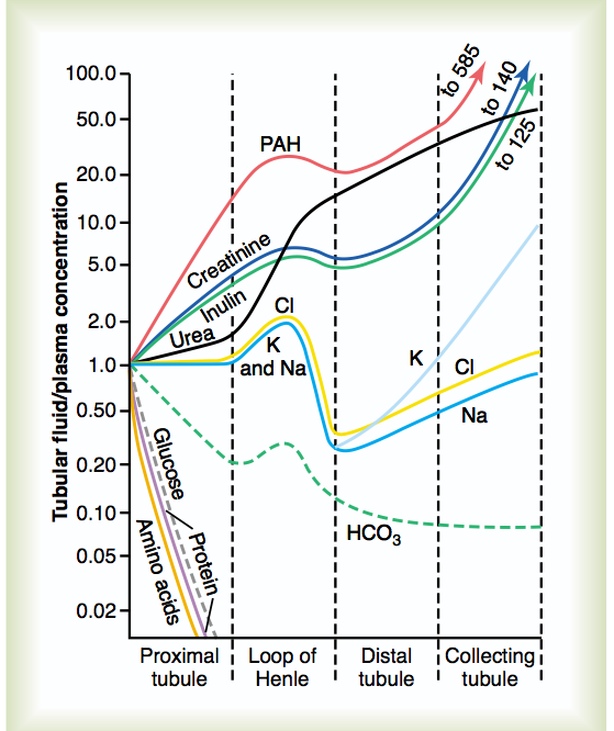 Filtered Substances Graph; Renal Physiology-screen-shot-2011-06-22-11.24.08-am.png