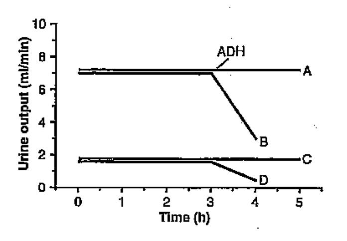 ADH Response Question!-screen-shot-2011-06-29-8.24.12-pm.png