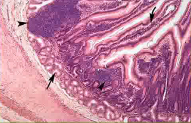 Identify the Histo Slide-screen-shot-2011-08-09-2.26.37-pm.png