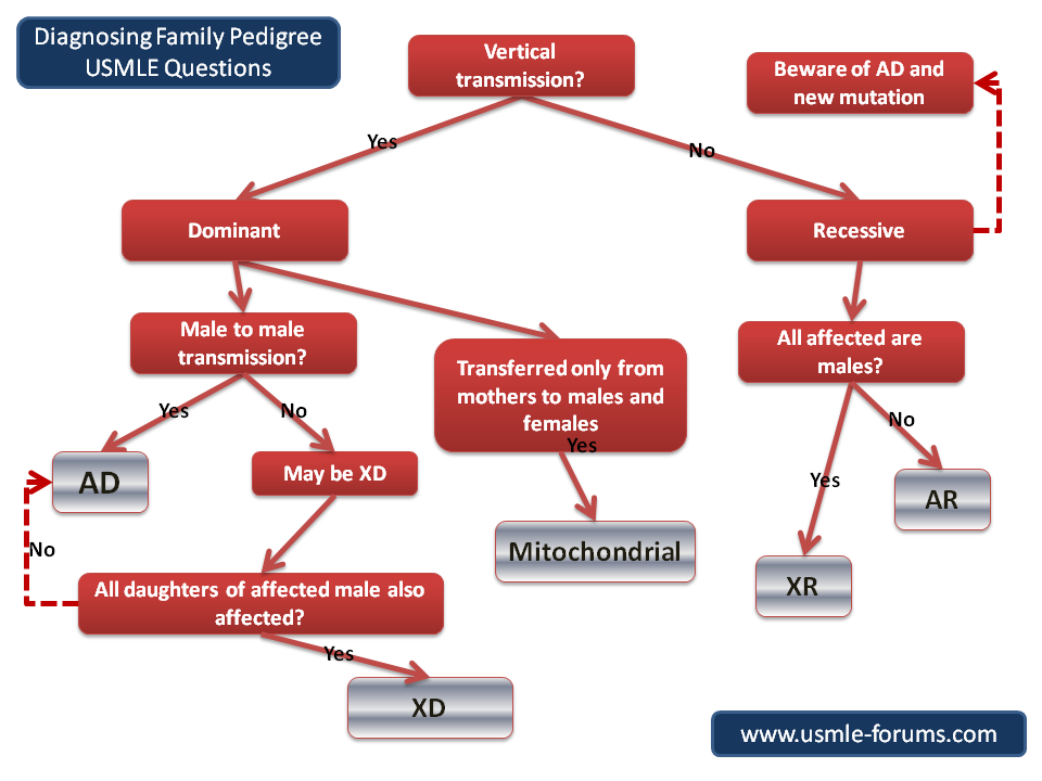 Answering Family Pedigree Questions-solving-family-pedigree-flow-chart-002.png