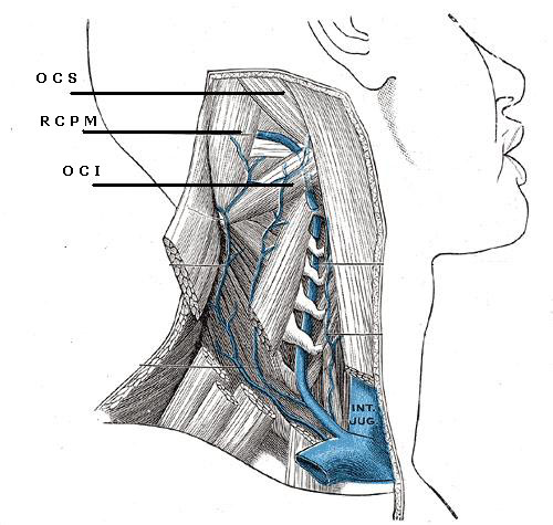 The Neck Triangles-suboccipital-triangle.jpg