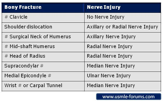 Upper Limb Fractures and Nerve Injuries-ulfni001.jpg