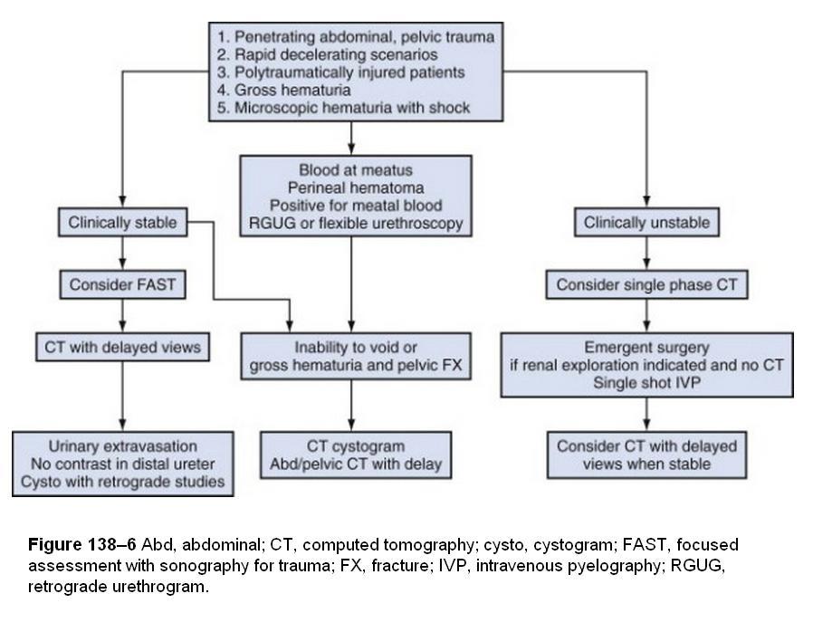 Pelvic Fracture + Bloody Urine-urology.jpg