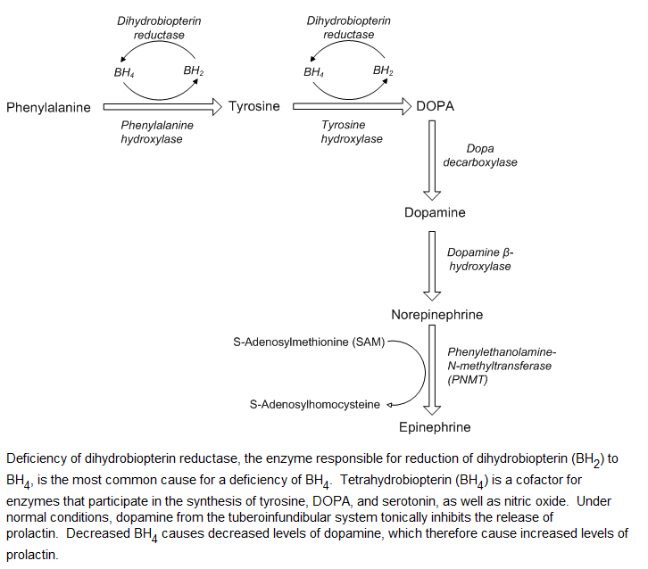 Hyperphenyalaninemia and Hyperprolactinemia!-uw212.png